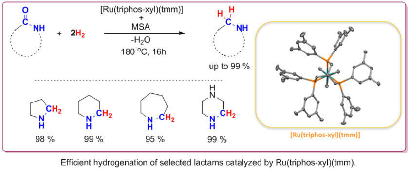 Focus areas of the working group heterogenous catalysis